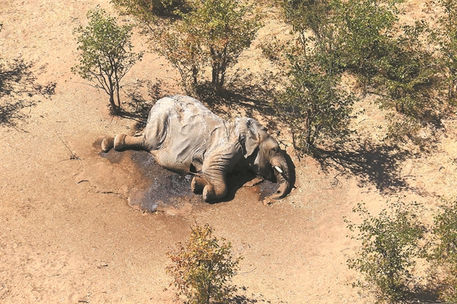Γιατί πεθαίνουν οι ελέφαντες στην Μποτσουάνα | tovima.gr