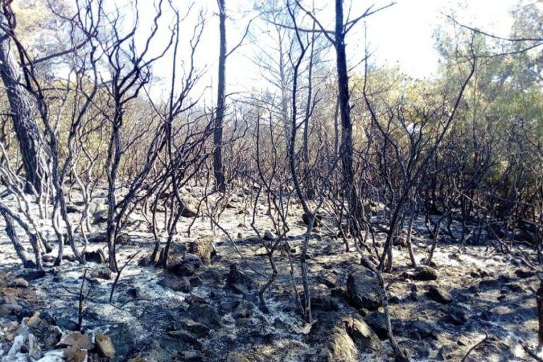 Λέσβος : Για δεύτερη ημέρα καίει η φωτιά στα βουνά της Θερμής | tovima.gr