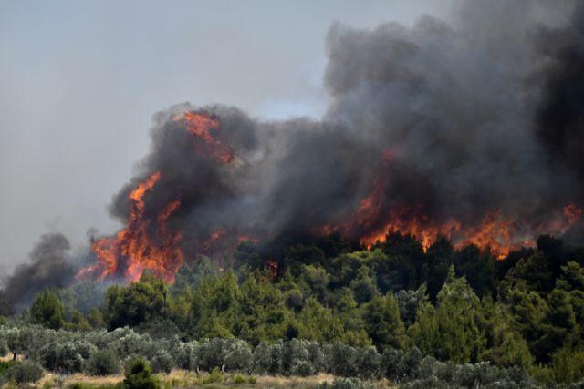 Κεχριές : Μεγάλη αναζωπύρωση | tovima.gr