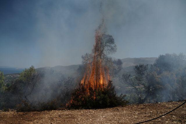 Κρήτη: Φωτιά στον Άγιο Νικόλαο – Μεγάλη μάχη με τις φλόγες   tovima.gr