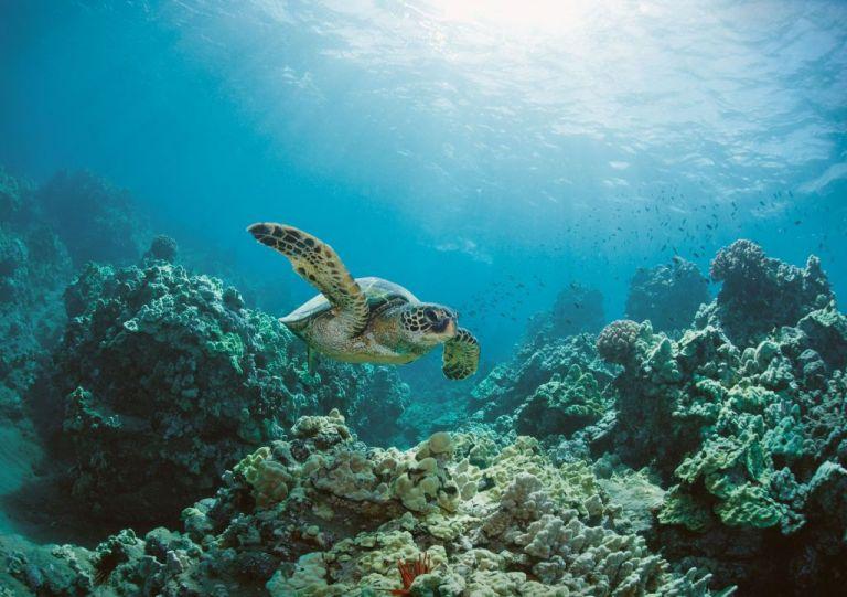 H υπερθέρμανση του πλανήτη οδηγεί θαλάσσια οικοσυστήματα σε «αόρατη μετανάστευση» | tovima.gr