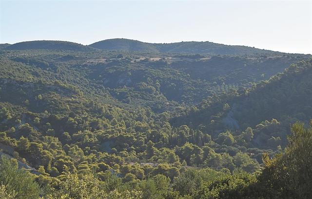 Υπεραιωνόβιοι μάρτυρες: Τα δέντρα που έζησαν την επανάσταση του 1821 | tovima.gr