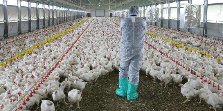 Εν μέσω κορωνοϊού, η ΕΕ προειδοποιεί για τη γρίπη των πτηνών   tovima.gr