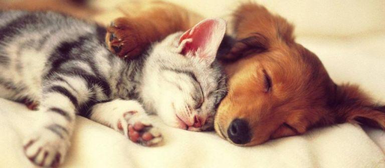 Κορωνοϊός: Οι γάτες μεταδίδουν τον ιό μεταξύ τους, οι σκύλοι όχι   tovima.gr