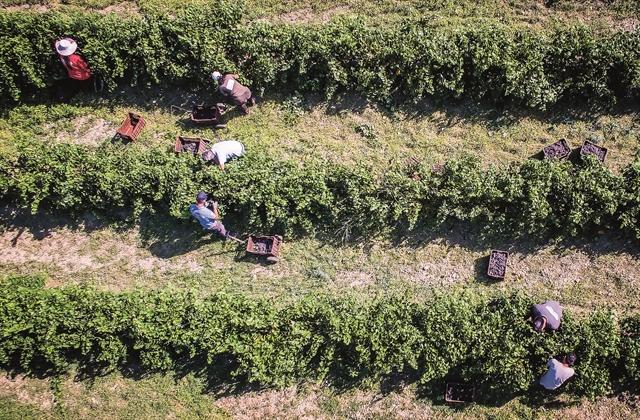 Προτεραιότητα στη «γεωργία ακριβείας» και στα ποιοτικά προϊόντα | tovima.gr