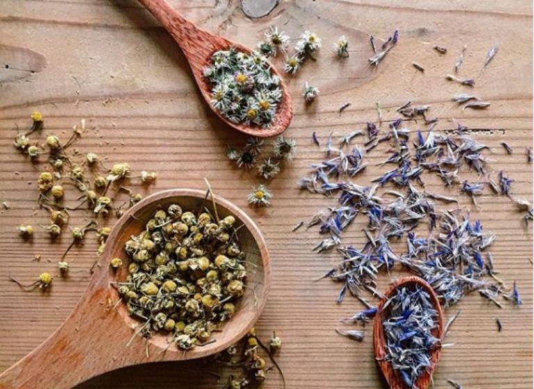 Ποια βότανα φέρνουν ευτυχία, συγκέντρωση και δύναμη | tovima.gr