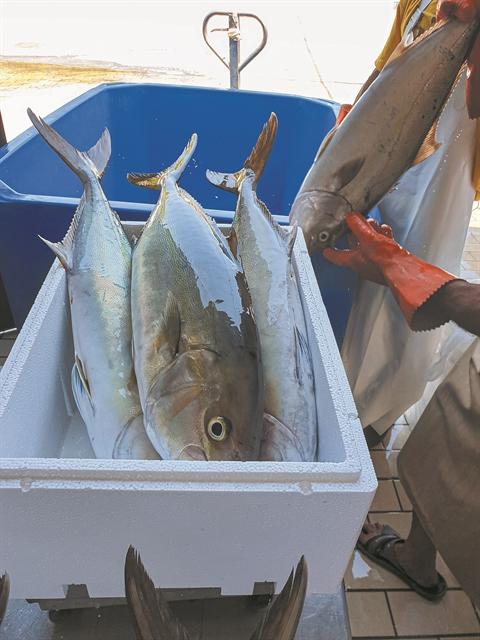 Ψαρί πελαγίσιο 'Ή ιχθυοκαλλιέργειας;   tovima.gr