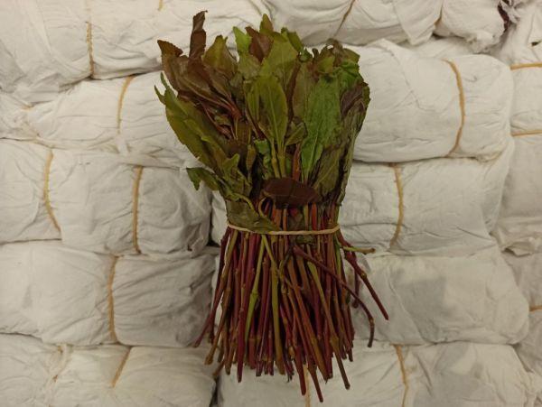 Μετέφεραν 100 κιλά σπάνιου ναρκωτικού φυτού από το Τελ Αβίβ – Δύο συλλήψεις | tovima.gr