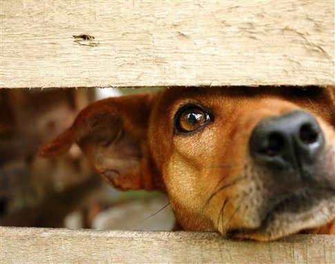 Βασανισμός ζώων : Να γίνει κακούργημα – Εισήγηση Βορίδη | tovima.gr