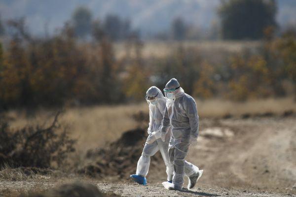 Κορωνοϊός : Θανατώθηκαν πάνω από 1.800 μινκ – Ελεγχοι σε άλλες 4 φάρμες | tovima.gr