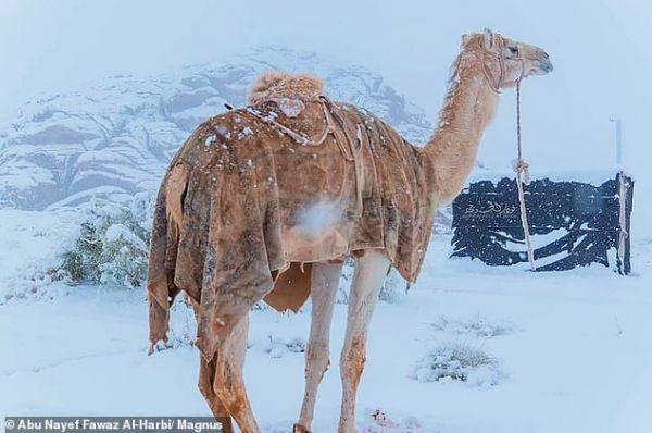 Χιόνισε στη Σαχάρα – Στους μείον 2 βαθμούς η θερμοκρασία στη Σαουδική Αραβία [εικόνες] | tovima.gr