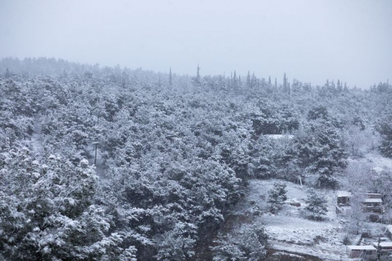 Καιρός : Έρχεται ισχυρός χιονιάς από το Σάββατο με πολικές θερμοκρασίες   tovima.gr