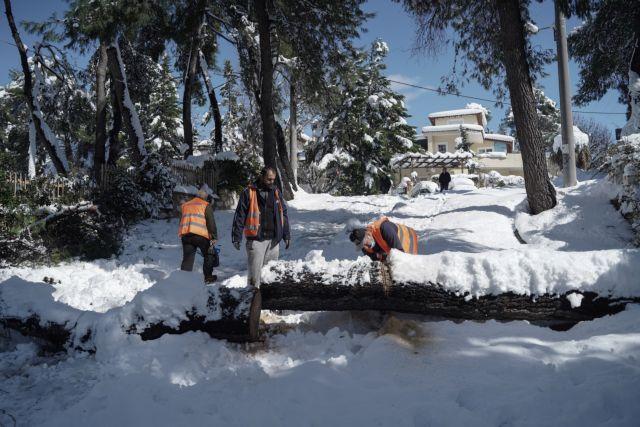 Πόλεμος ανακοινώσεων ΔΕΔΔΗΕ-ΚΕΔΕ για το κλάδεμα των δέντρων | tovima.gr