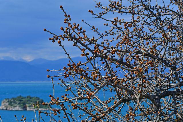Καιρός: Ανεβαίνει κι άλλο η θερμοκρασία – Ερχεται αφρικανική σκόνη   tovima.gr