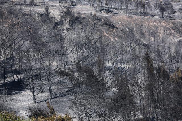 Γεράνεια Όρη: Να κηρυχθεί άμεσα η περιοχή αναδασωτέα ζητά το Περιφερειακό Συμβούλιο Αττικής | tovima.gr