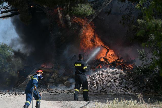 Θεσσαλονίκη: Μεγάλη φωτιά στην Πυλαία – Μεγάλη κινητοποίηση από την Πυροσβεστική   tovima.gr