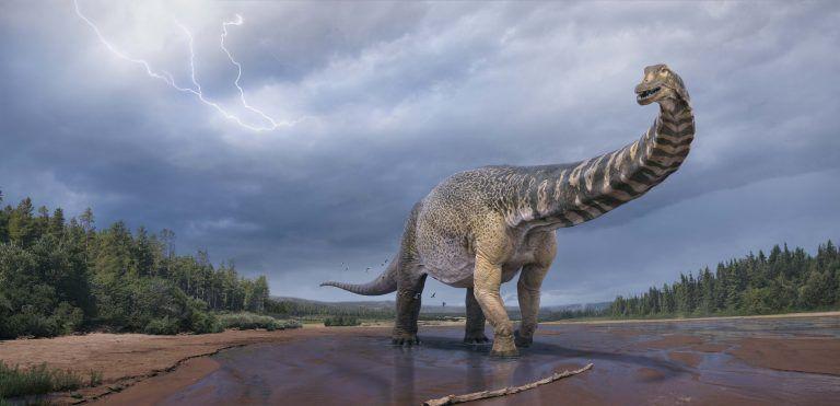 Ανακάλυψαν ίχνη του δεινόσαυρου «Αυστραλοτιτάνα» – Είχε μέγεθος γηπέδου μπάσκετ και ύψος δύο ορόφων   tovima.gr