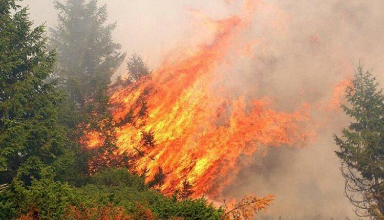 Φωτιά στην Άνω Ποταμιά Σπάρτης | tovima.gr