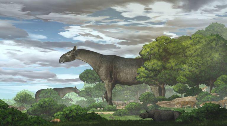 Προϊστορικός ρινόκερος ήταν βαρύτερος από ελέφαντα, ψηλότερος από καμηλοπάρδαλη   tovima.gr