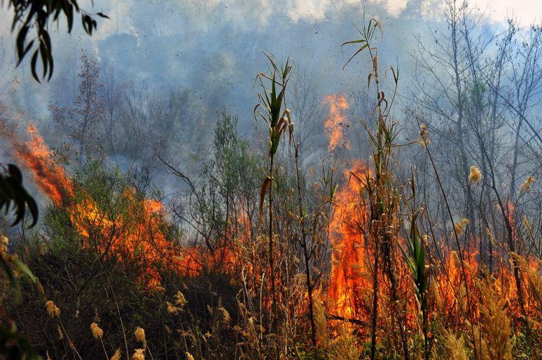 Μεγάλη φωτιά στη Χίο – Πλάνα μέσα από καναντέρ | tovima.gr