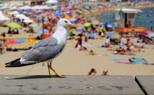 Ισπανία: Στους 44 βαθμούς την Κυριακή το θερμόμετρο | tovima.gr