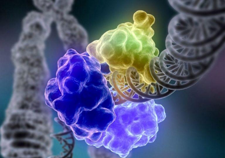 Χιλιάδες μεταλλάξεις ενζύμων «στο μικροσκόπιο» ενός τσιπ | tovima.gr