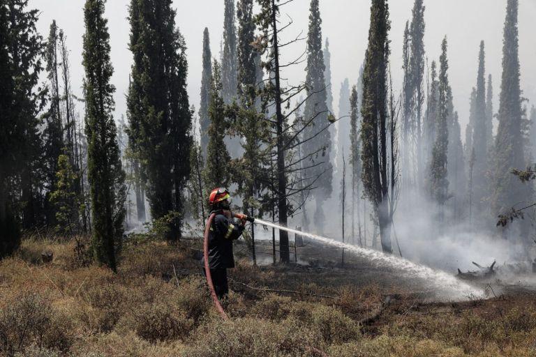 Θεσσαλονίκη: Φωτιές σε Ευκαρπία και Λητή | tovima.gr