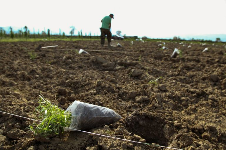 Καύσωνας – Προσοχή στους εργαζόμενους του πρωτογενή τομέα συνιστά το υπουργείο Αγροτικής Ανάπτυξης | tovima.gr