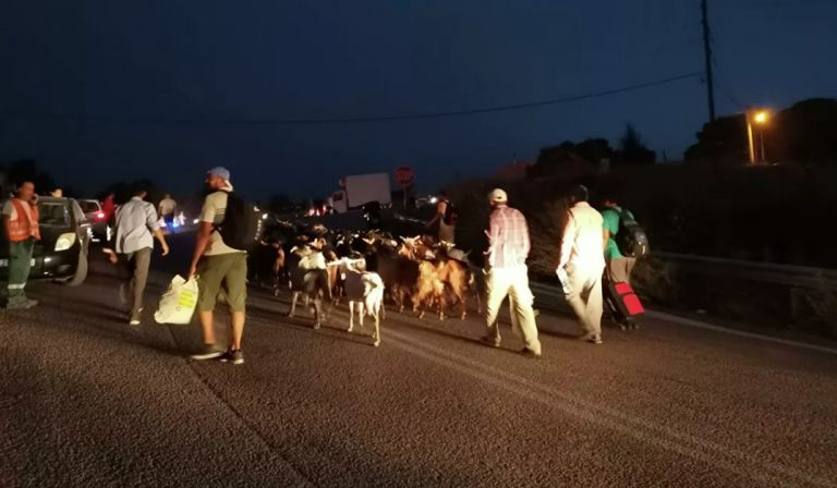 Συγκλονιστικές εικόνες από τις Αφίδνες – Κάτοικοι φεύγουν να σωθούν με βαλίτσες και τα ζώα τους | tovima.gr