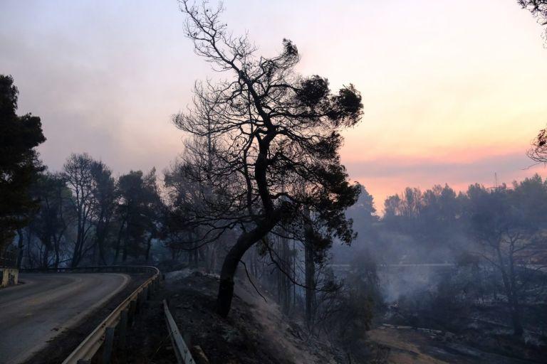 Φωτιά στη Βαρυμπόμπη – Αυτά είναι τα μέτρα στήριξης για τους πυρόπληκτους | tovima.gr