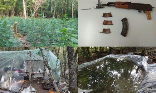 Κόνιτσα –   Οργανωμένη φυτεία κάνναβης και ο «φύλακας» με καλάσνικοφ!   tovima.gr