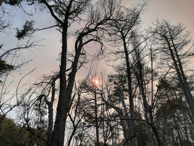 Φωτιά στην Αττική – Θλιβερές εικόνες στο Κρυονέρι – Οδοιπορικό του in.gr στα καμένα   tovima.gr