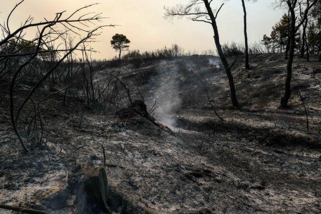 Σύλληψη υπόπτου για εμπρησμό – Εβαλε φωτιά σε δύο σημεία στο άλσος της Πετρούπουλης   tovima.gr