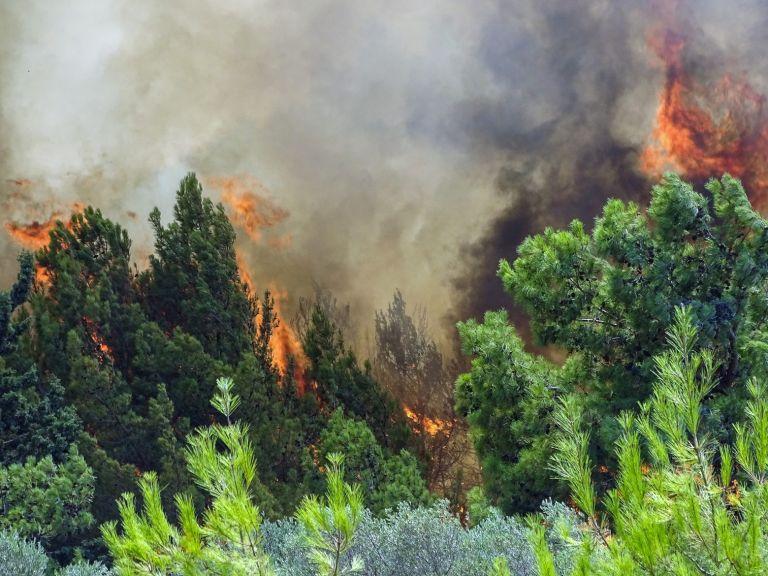 Φωτιές – «Πράσινες βόμβες» έτοιμες να εκραγούν   tovima.gr
