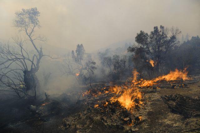 Αντιπεριφερειάρχης Ανατολικής Αττικής – «Έγινε μάχη στους Θρακομακεδόνες, γλιτώσαμε το κάψιμο πολλών σπιτιών» | tovima.gr