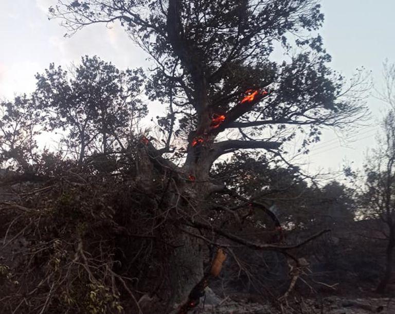Φωτιά στη Μάνη – Στη Δεσφίνα το βασικό μέτωπο της πυρκαγιάς   tovima.gr