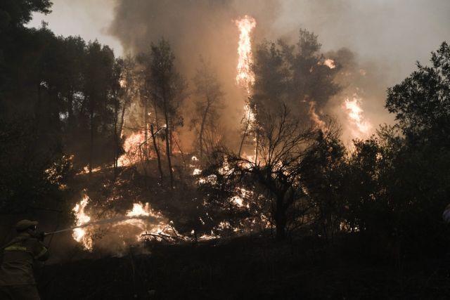 Λέκκας για φωτιές – Σε μία δεκαετία θα μπορέσουν να ανακάμψουν οι καμένες περιοχές | tovima.gr