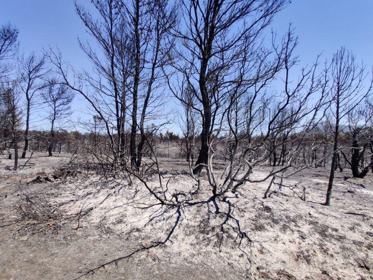 Σαρηγιάννης – Τα σωματίδια από το νέφος των πυρκαγιών θα αιωρούνται εως και 10 μέρες ακόμη – Τι πρέπει να γίνει | tovima.gr