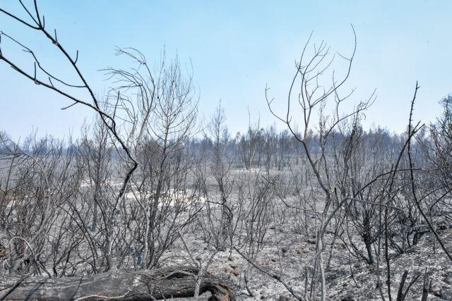 Λέκκας – Επτά φορές μεγαλύτερος ο κίνδυνος πλημμύρας μετά τις πυρκαγιές   tovima.gr