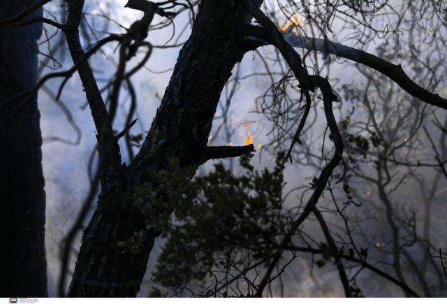 Βίλια – Κοντά στο Πανόραμα και στην Οινόη οι φλόγες – Έκκληση για περισσότερα εναέρια μέσα | tovima.gr