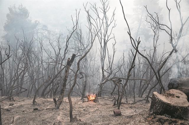 Πυρκαγιές – Τα έκτακτα μέτρα για την προστασία και την αποκατάσταση του φυσικού περιβάλλοντος | tovima.gr