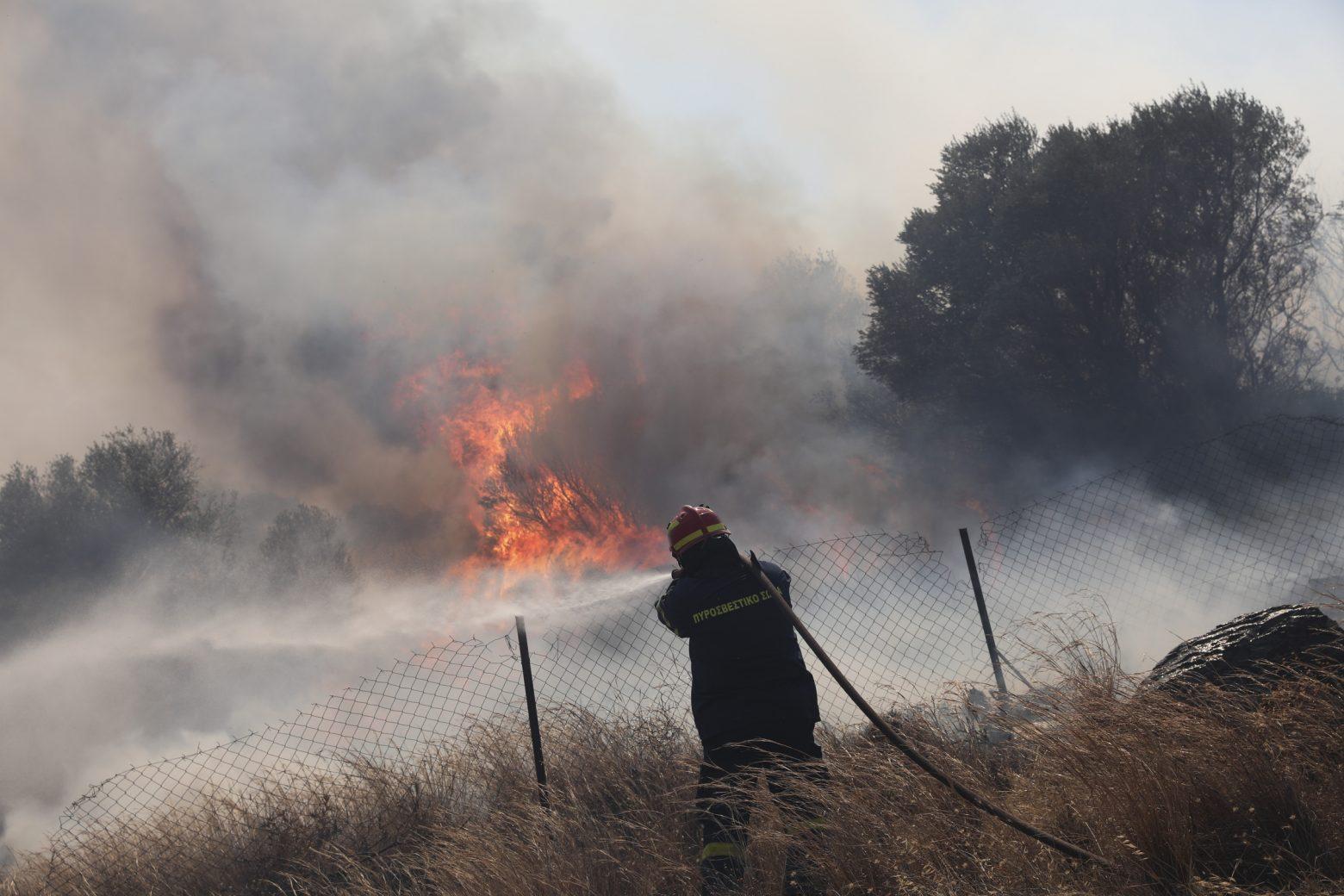 Πάνω από 94.000 στρέμματα η καμένη γη στα Βίλια – Πολωνοί και Ρουμάνοι  παραμένουν στην Ελλάδα για τις φωτιές - Ειδήσεις - νέα - Το Βήμα Online