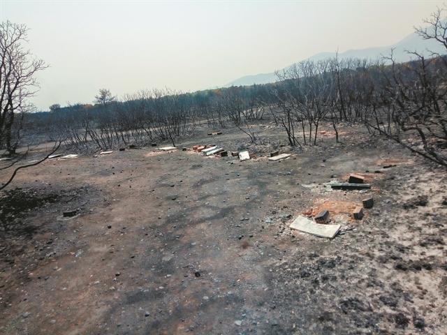 Μέλισσες – Ενα από τα αθώα θύματα των πυρκαγιών | tovima.gr