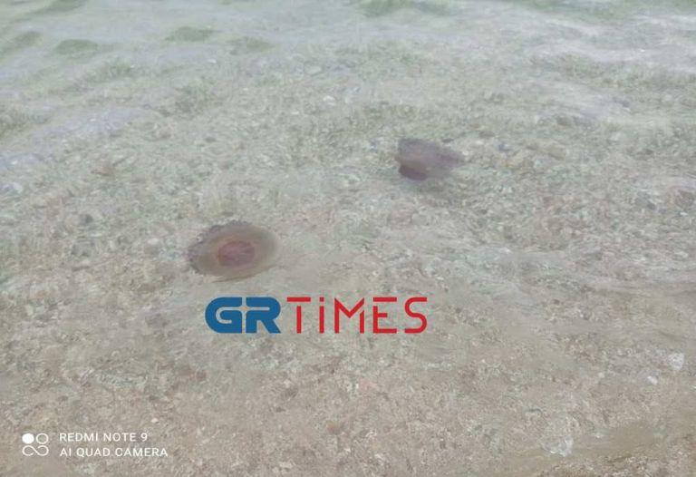 Χαλκιδική – Κοπάδι από μέδουσες σε παραλία στην Ολυμπιάδα | tovima.gr