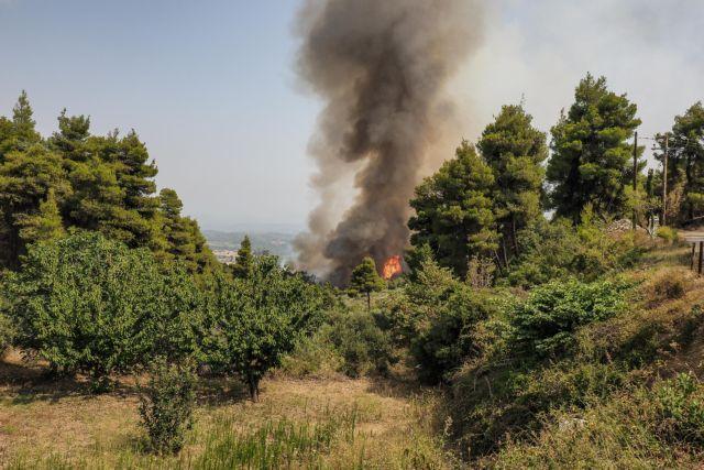 Πύργος – Χωρίς ενεργό μέτωπο η φωτιά στην Κορυφή Ηλείας | tovima.gr