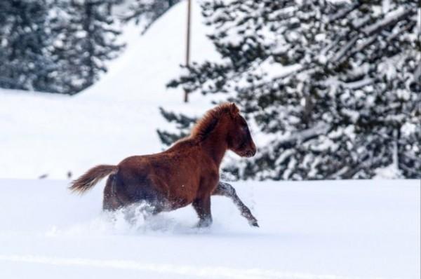 Μερομήνια – Έρχεται πολύ «βαρύς» χειμώνας | tovima.gr