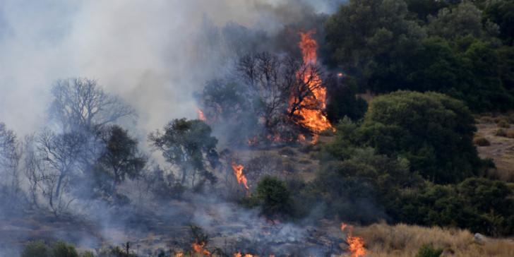 Αργολίδα – Φωτιά στην περιοχή Ανω Βουνά στις Μυκήνες   tovima.gr