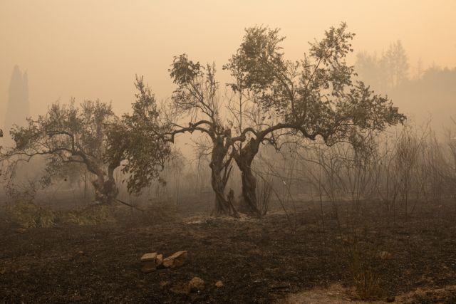 Δώρο 100.000 ελαιόδεντρα στην Αρχαία Ολυμπία από Αμερικάνικο Ίδρυμα | tovima.gr
