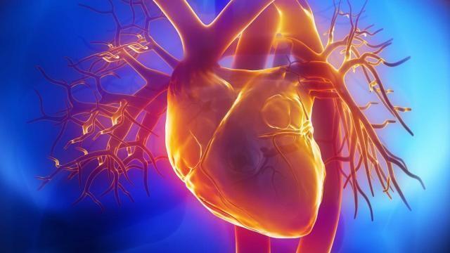 Στην «καρδιά» των γενετικών καρδιαγγειακών νοσημάτων | tovima.gr