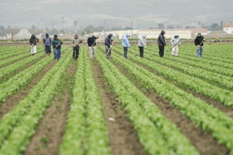 Τα εργατικά χέρια των μεταναστών σώζουν τις ελληνικές επιχειρήσεις | tovima.gr
